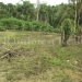belize-25-acres-for-sale-farm33