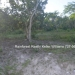 Belize Residential Lots for Sale Bullet Tree1