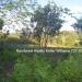 Belize Residential Lots for Sale Bullet Tree6