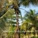 Belize-Resort-Ready-Property-near-San-Ignacio-Town29