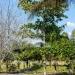Belize-Resort-Ready-Property-near-San-Ignacio-Town31