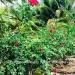 Belize-Resort-Ready-Property-near-San-Ignacio-Town8