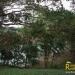 belize riverfront home bullet Tree