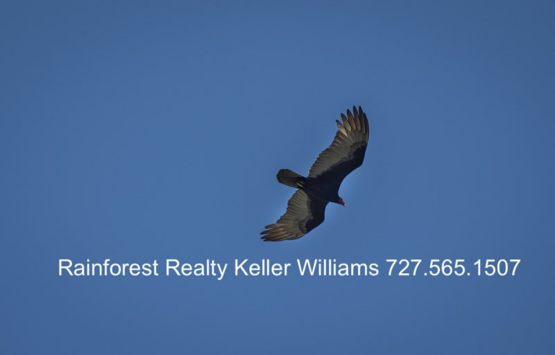 Belize Estate for Sale San Ignacio Bird