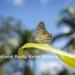 Belize-Casa-del-Caballo-Blanco-for-Sale14