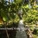 Belize-Casa-del-Caballo-Blanco-for-Sale42