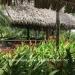 Belize-Home-Business-Al-Tun-Ha38