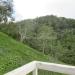 Large Lychee Farm in Belize 40