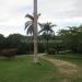 Large Lychee Farm in Belize 42