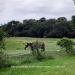 Belize-Small-home-on-15.36-Acres-5