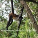 Belize-Lot-in-Rainforest-of-Cayo-District2
