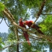 Belize-Lot-in-Rainforest-of-Cayo-District3