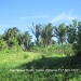 3.5 Acre Lot in Esperanza, Cayo1