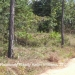 5 Acres in Mountain Pine Ridge2