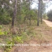 5 Acres in Mountain Pine Ridge3