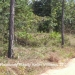 5 Acres in Mountain Pine Ridge8