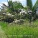 Belize-Lot-in-a-Gated-Community2