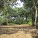 Five Acres western Belize with Home31