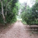 Five Acres western Belize with Home6