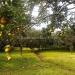 Belize Coastal Road Home orange grove