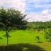 Belize Tree House for Sale Bullet Tree Village 39