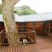 Belize Tree House for Sale Bullet Tree Village 44
