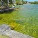 Belize Lagoon Front Shangri-la Property for Sale 43
