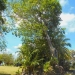 Belize Lagoon Front Shangri-la Property for Sale 54
