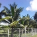 Belize-Home-on-1-Acre-Bullet-Tree3