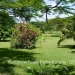 Belize-50-Acres-with-Three-Homes-17