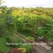 Belize-50-Acres-with-Three-Homes-20