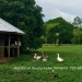 Belize-50-Acres-with-Three-Homes-39
