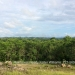Belize-50-Acres-with-Three-Homes-41