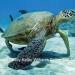 Ambergris Caye Oceanfront Villa5