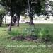 0.5 Acres near Belize City19