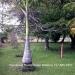 0.5 Acres near Belize City22