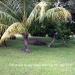 0.5 Acres near Belize City23