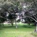0.5 Acres near Belize City24