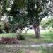 0.5 Acres near Belize City26