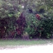 0.5 Acres near Belize City45