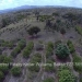 Belize-10-Acres-Bullet-Tree-Village12