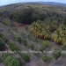 Belize-10-Acres-Bullet-Tree-Village13