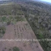 Belize-10-Acres-Bullet-Tree-Village26