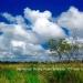 Belize Land 50 Acres near Belmopan10