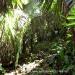 Belize Land 50 Acres near Belmopan11