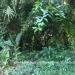 Belize Land 50 Acres near Belmopan7