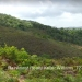 Belize-Barton-Creek-15-Acres-with-Workshop3