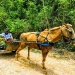 Belize-Barton-Creek-15-Acres-with-Workshop4