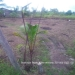 Belize Residential Lot Close Commute to Belmopan7