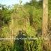 Belize-Santa-Elena-Lot2